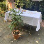 Trauung in der Villa Rosental - Deko